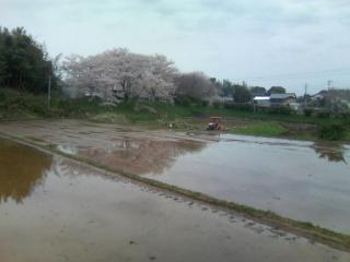 鎮西町石室分校あとの桜と代掻き