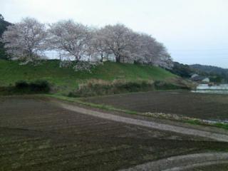 鎮西町石室分校の桜