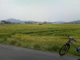 和多田の麦畑