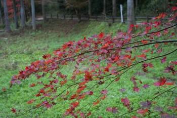 緑とオレンジ もう枯れかけている葉